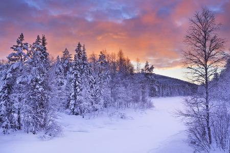 Wald mit Schnee Lappland